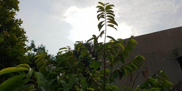 Foto Backlight Tanpa HDR