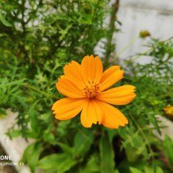 Foto Portrait Bunga Oranye