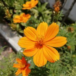 Bokeh Bunga