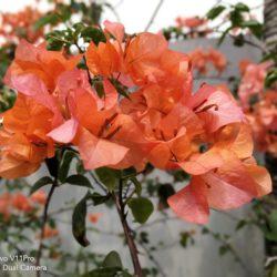 Foto Bokeh Bunga Merah