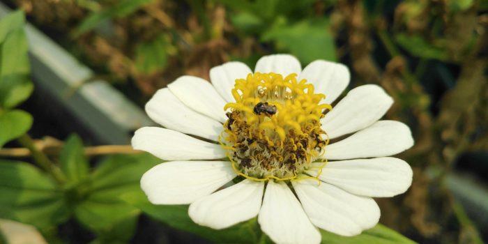 Bunga Bokeh