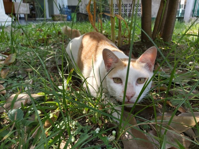 Samsung Galaxy A70 Kamera Belakang Kucing