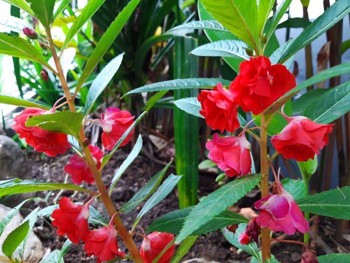Samsung Galaxy A30 Kamera Belakang Bunga Merah