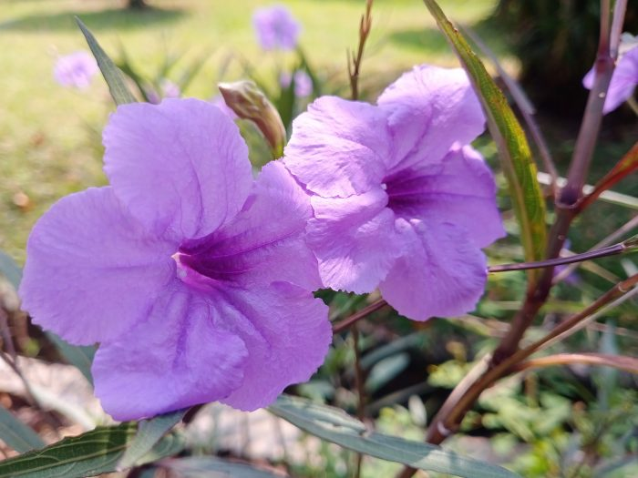 Vivo S1 Kamera Belakang Bunga