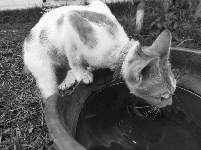 OPPO A Kamera Belakang Mono Kucing Minum