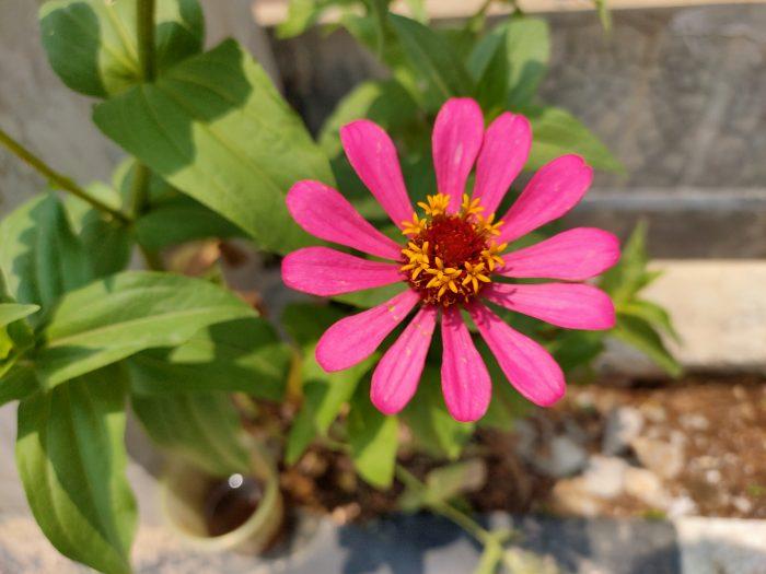 Realme5Pro-Bunga-ChromaBoost