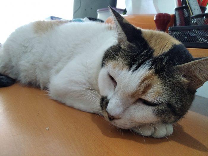 Redmi7A-Kucing