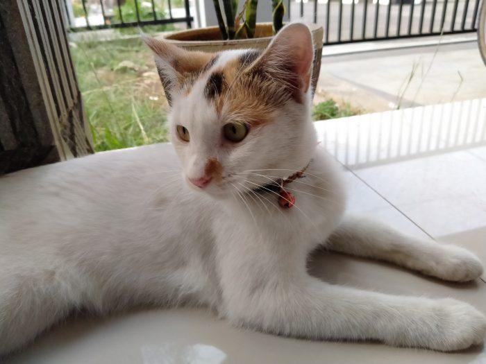 realme5-kucing