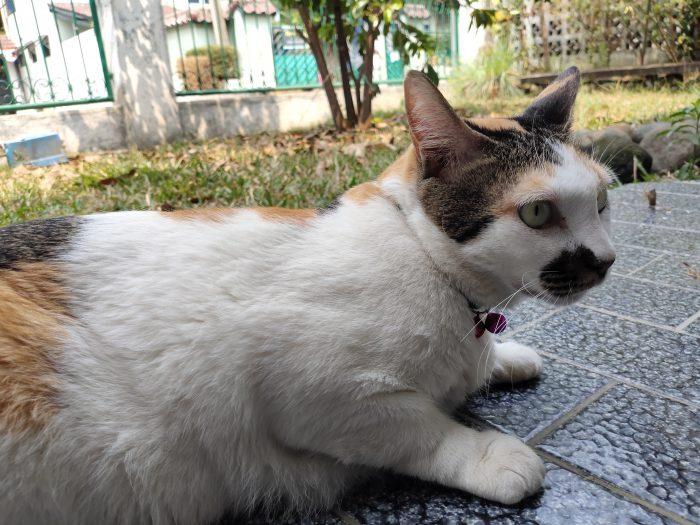 vivo Z1 Pro Kamera Belakang Kucing
