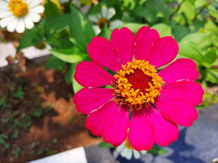 Samsung Galaxy A30s Kamera Belakang Bunga 1