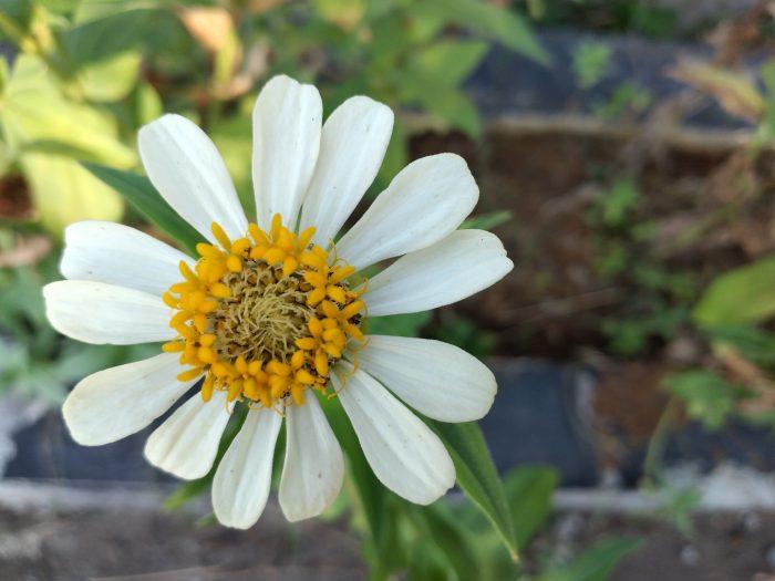 Samsung Galaxy A20s Kamera Belakang Bunga