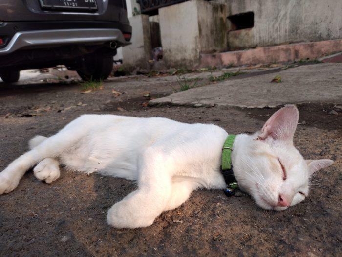 Samsung Galaxy A20s Kamera Belakang Kucing