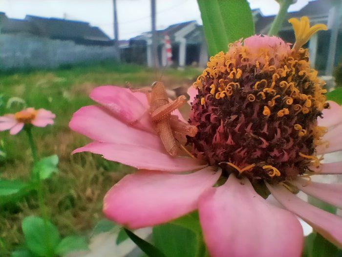 realme 5s Kamera Belakang Bunga Makro Chroma