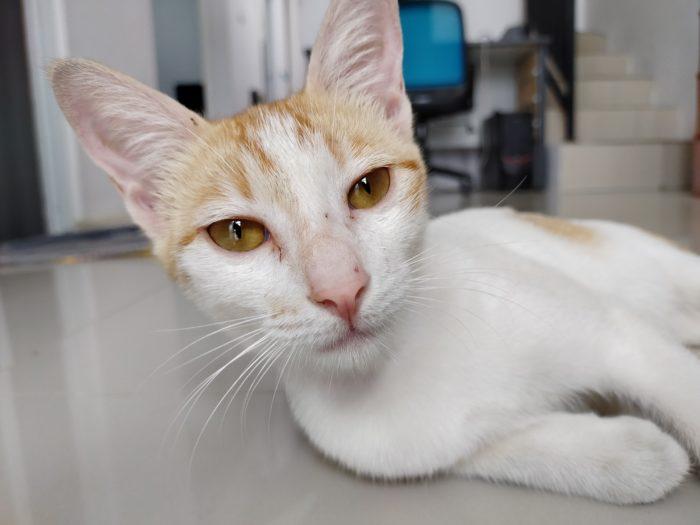 realme 5s Kamera Belakang Kucing Auto