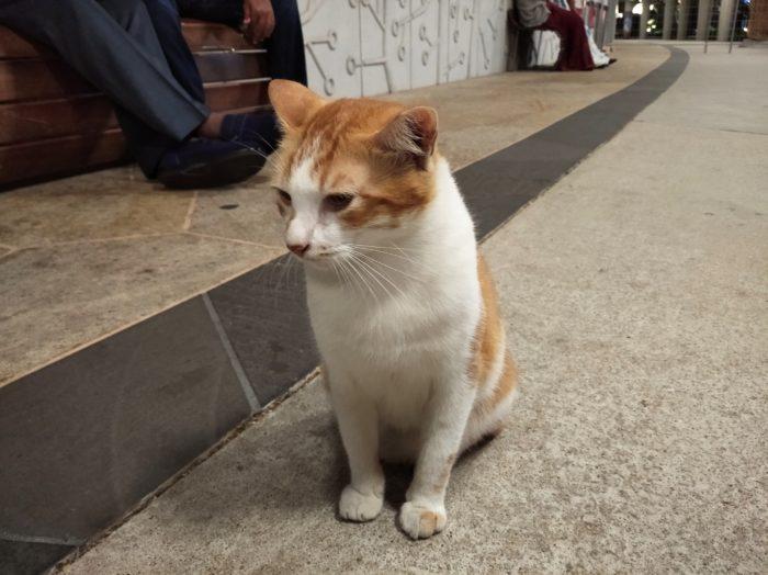 Redmi8-Kucing