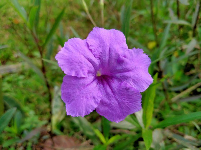 realme 5i Kamera Belakang Bunga Auto Chroma
