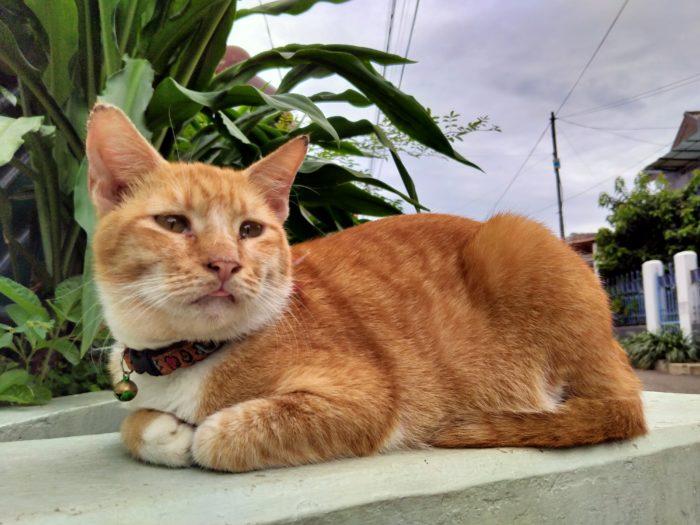 realme 5i Kamera Belakang Kucing Chroma Boost