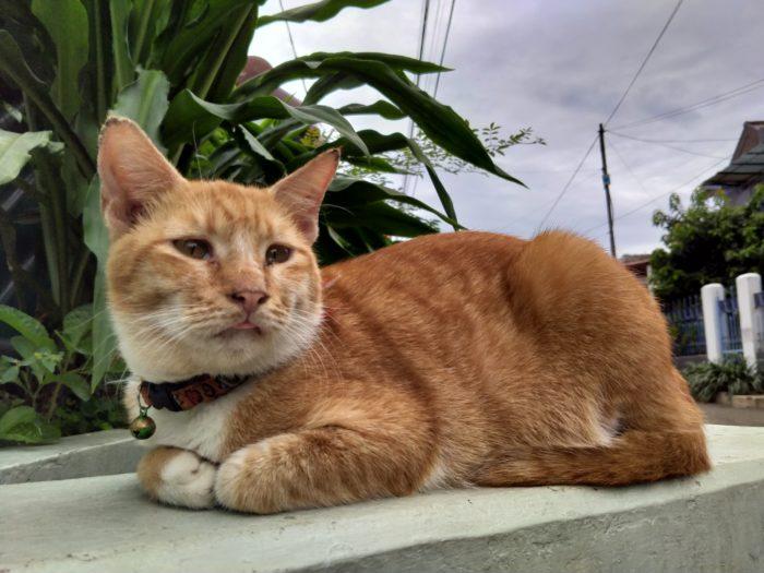 realme 5i Kamera Belakang Kucing Normal