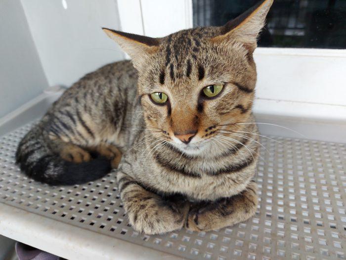 GalaxyA71-Normal-Cat