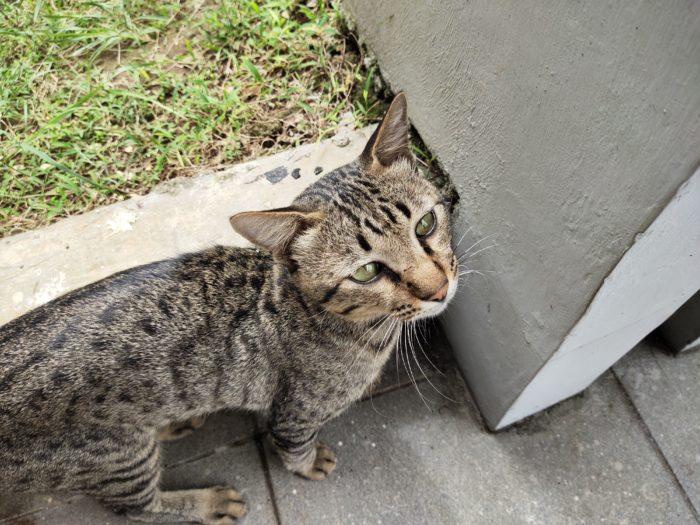 VivoV19-Cat-Normal