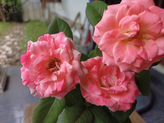 realme 6 kamera belakang bunga mawar 64MP