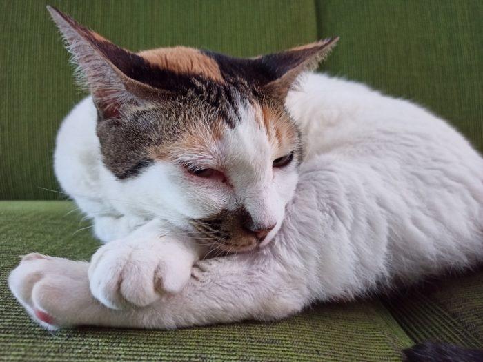 Reality 6 rear camera cat