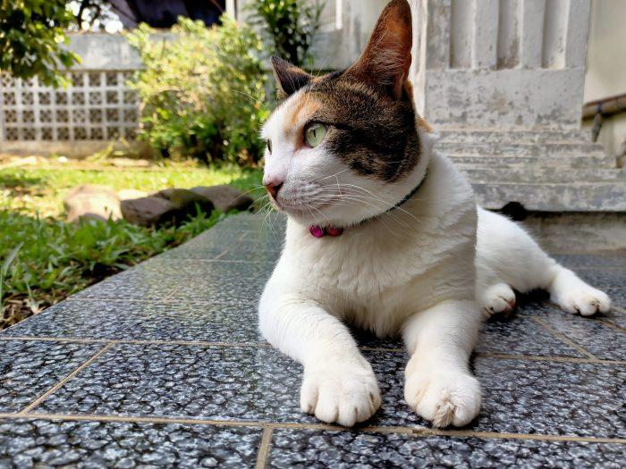 OPPO Reno3 Kamera Belakang Kucing