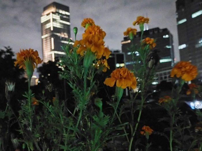 OPPOA92-Bunga-Night