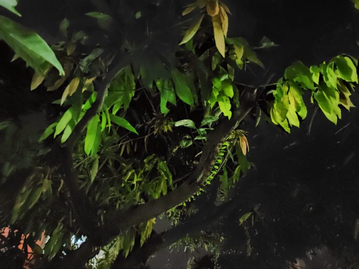 RedmiNote9Pro-Night-Pohon