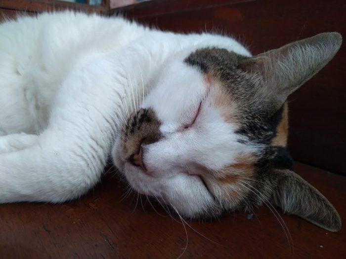 Samsung Galaxy M11 Kamera Belakang Kucing