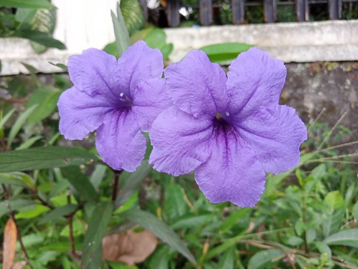 realme C11 Kamera Belakang Bunga