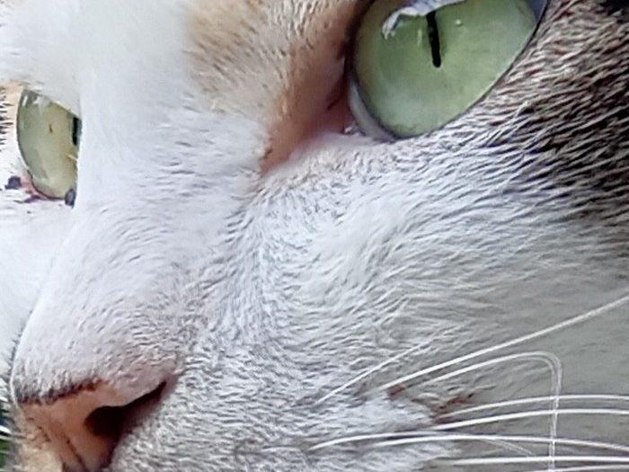 realme C11 Kamera Belakang Kucing Zoom