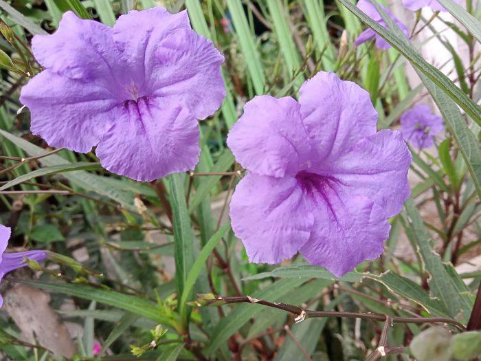 realme C15 Kamera Belakang Bunga
