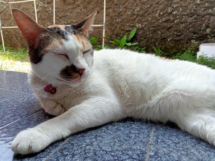 realme C15 Kamera Belakang Kucing