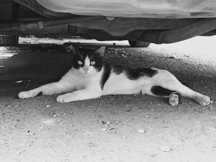 realme C15 Kamera Belakang Kucing BW