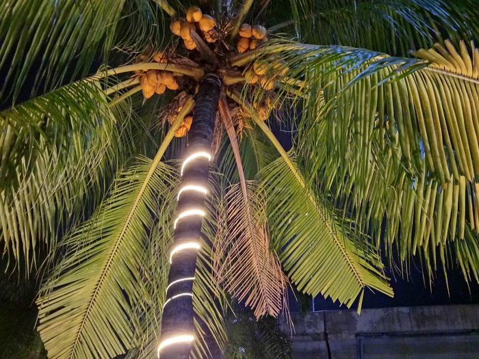 realme C15 Kamera Belakang Malam Pohon