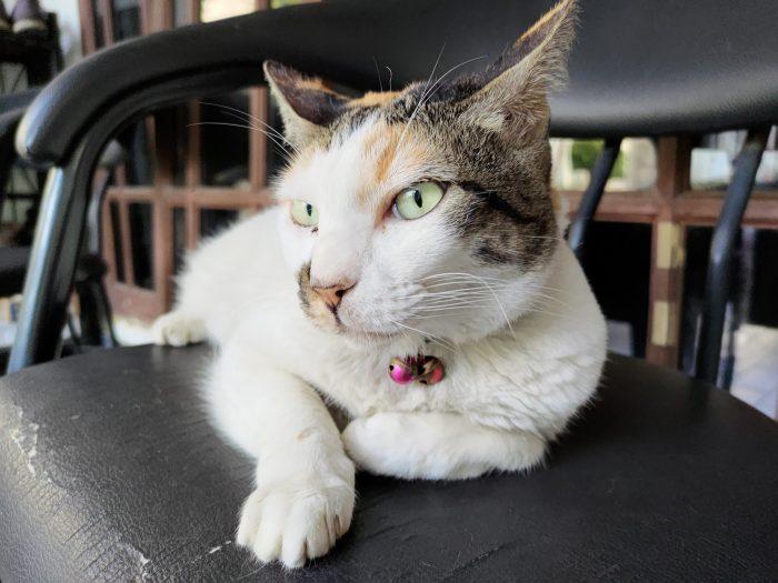ROG Phone 3 Kamera Belakang Kucing