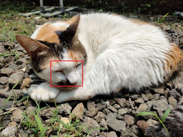 realme 7i Kamera Belakang Kucing 64MP