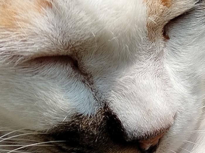 realme 7i Kamera Belakang Kucing 64MP Crop