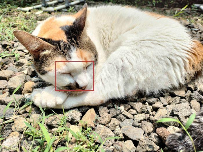 realme 7i Kamera Belakang Kucing Auto