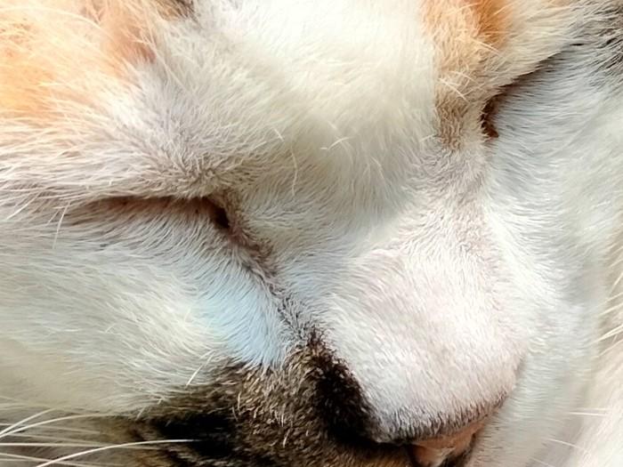 realme 7i Kamera Belakang Kucing Auto Crop