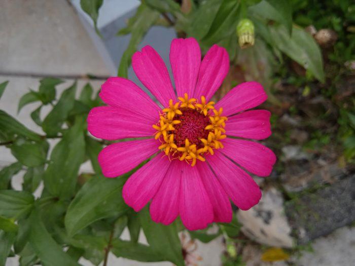 Redmi 9C Kamera Belakang Bunga