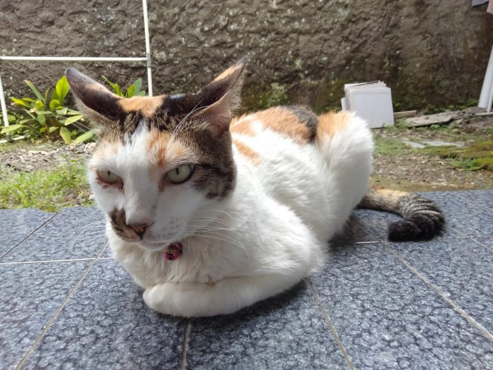realme C17 Kamera Belakang Kucing