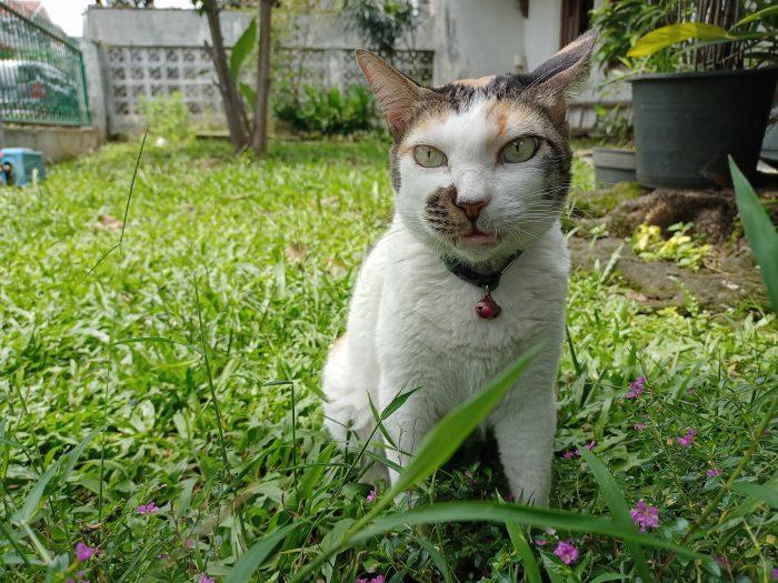realme narzo 20 Foto Kamera Belakang Kucing 48MP