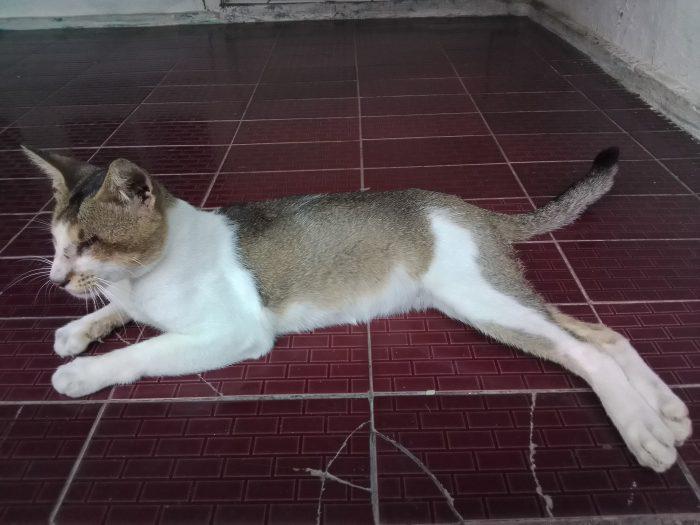NokiaC3-Kucing