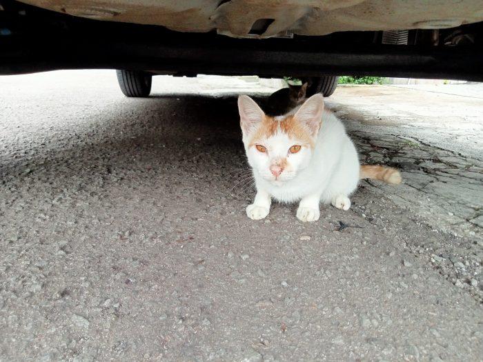 OPPO A15 Kamera Belakang Kucing