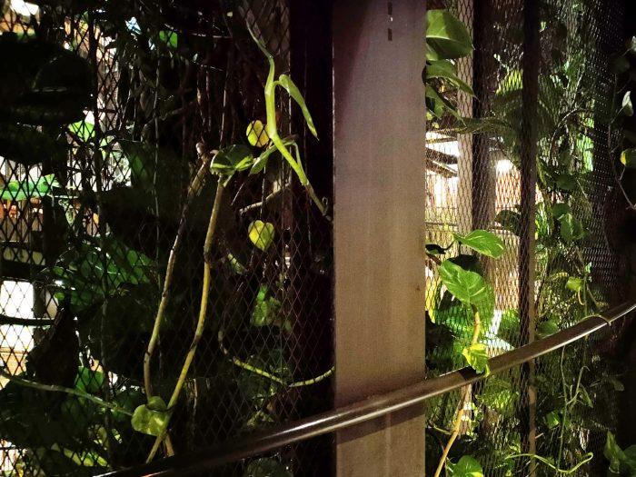 OPPO-Reno5-DarkMode Garden