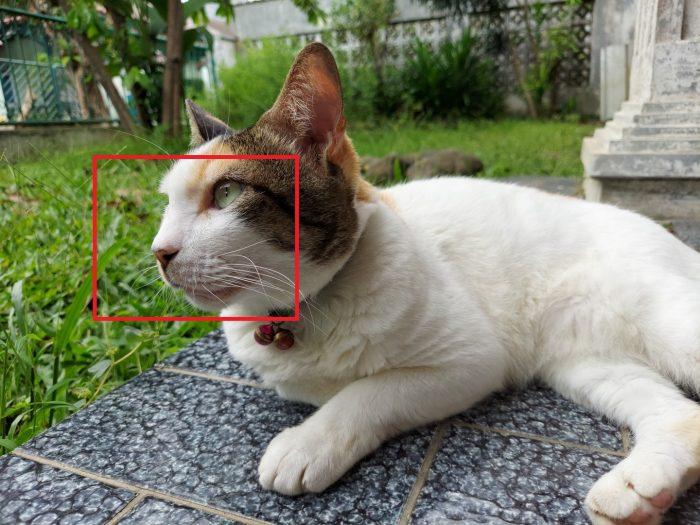 Review Samsung Galaxy M51 Kamera Belakang Kucing 64M