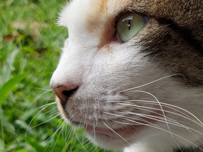 Review Samsung Galaxy M51 Kamera Belakang Kucing 64MP Crop
