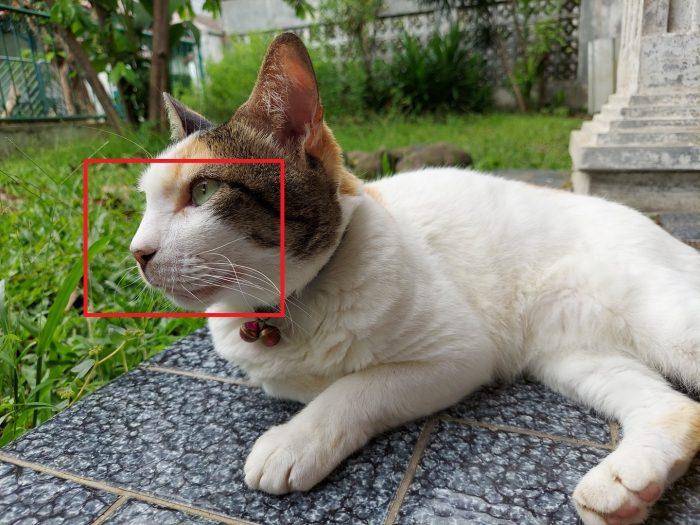Review Samsung Galaxy M51 Kamera Belakang Kucing Auto